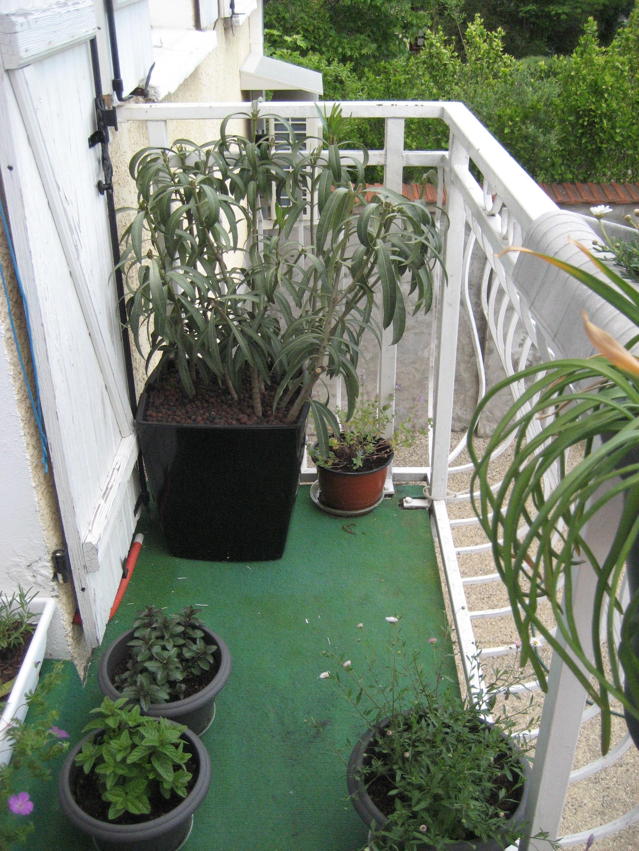 mon balcon la nature au balcon. Black Bedroom Furniture Sets. Home Design Ideas